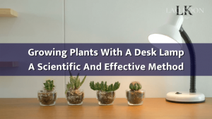 Growing Plants With A Desk Lamp - A Scientific And Effective Method