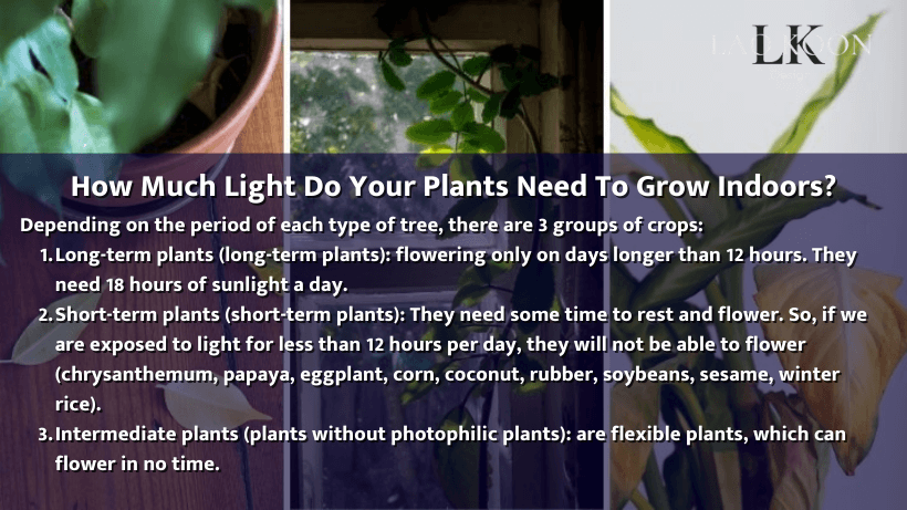 How much light do your plants need to grow indoors